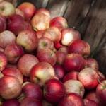 mille-fruits-ceuillette-4